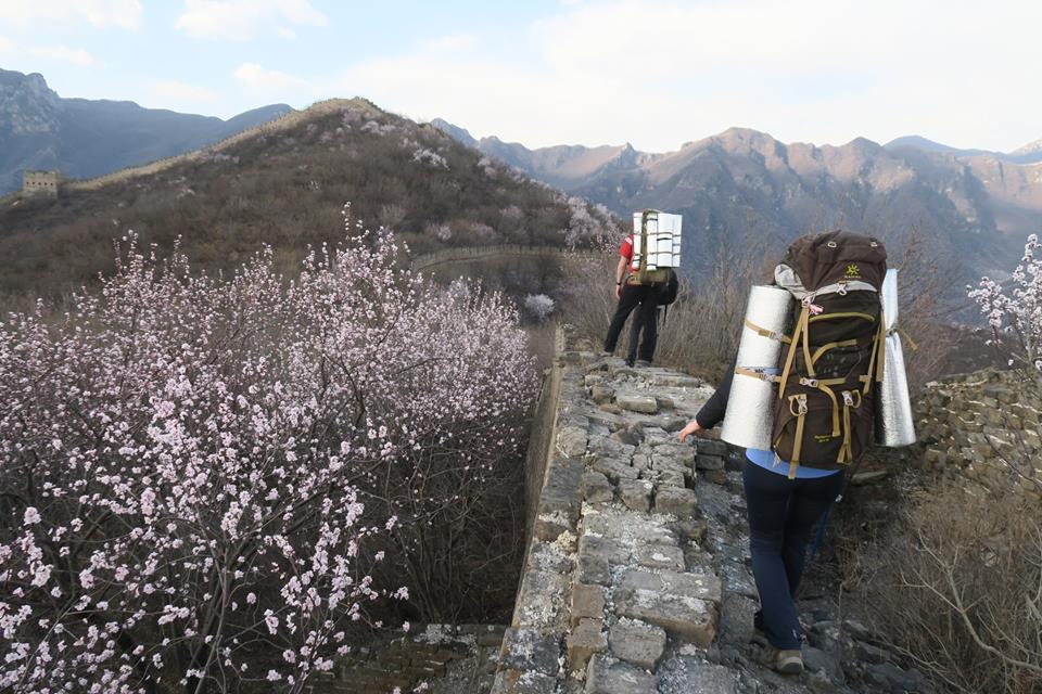 Wild Jiankou Great Wall hiking during Apricot flower season